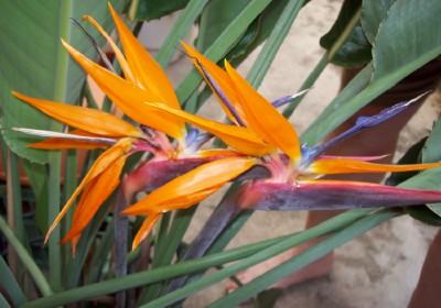 Bird_full bloom_smaller_2